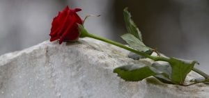 Rose on a tombstone